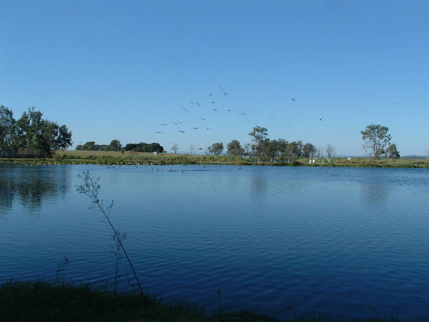 birds in flight over lake at Gatton Environmental Park