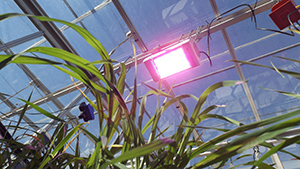 Energy efficient lighting in a greenhouse