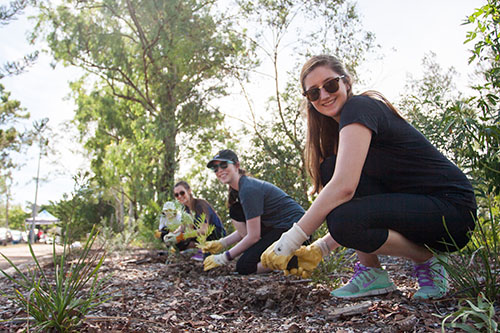 UQ Students planting saplings on campus