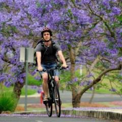Student cycling along Jacarandas