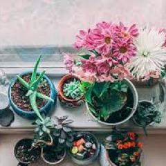 Window sill garden of potted plants