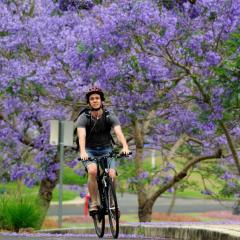 Cyclist riding down Jacaranda Lane at UQ St Lucia campus